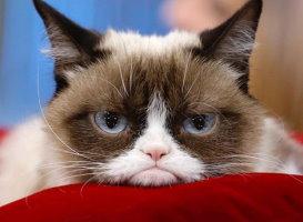 Grumpy friend - opowiadanie po angielsku