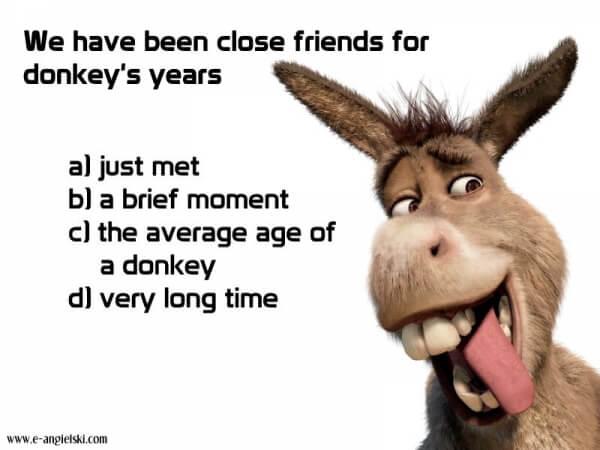 idiomy angielskie - donkey's years