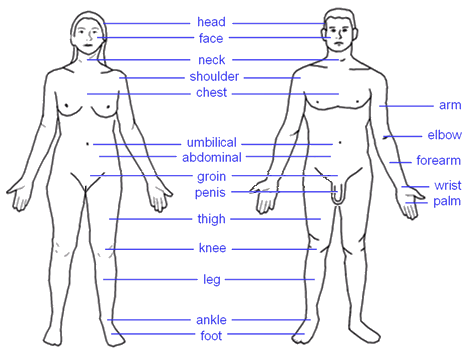 Image:Human body features.png